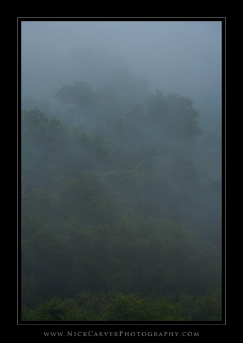 Oak Trees in Fog - Trabuco Canyon Trail, Orange County, CA