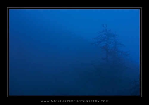 Spruce Trees in Fog - Trabuco Canyon Trail, Orange County, CA