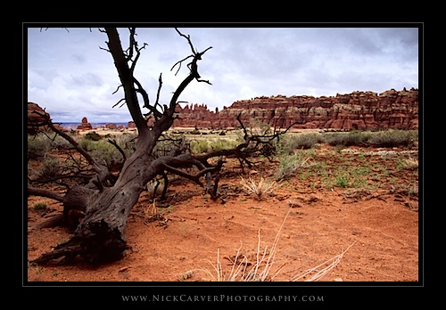 Fallen Tree in Canyonlands National Park, UT