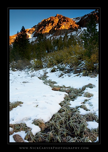 Near Ellery Lake at Sunrise