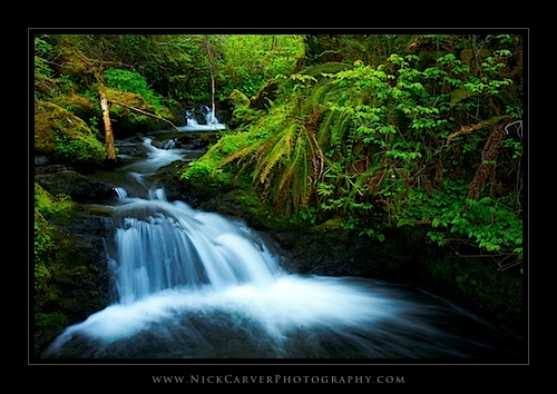 Creek Cascades in the Quinault Rainforest - Olympic National Forest, WA