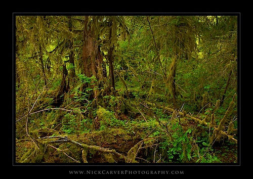 The Hoh Rain Forest - Olympic National Park, WA