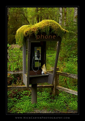 Pay Phone in the Hoh Rain Forest - Olympic National Park, WA