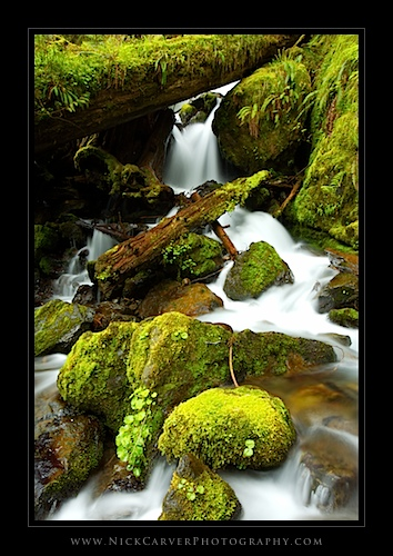 Lower Cascades of Merriman Falls - Olympic National Forest, WA