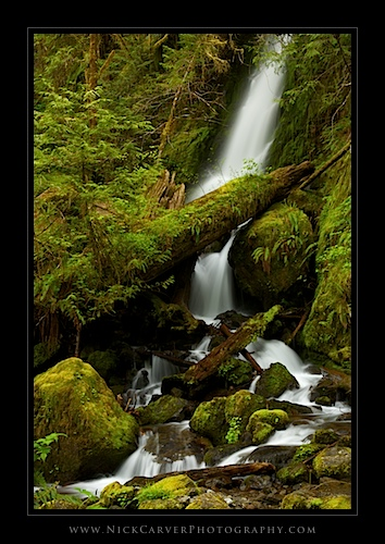 Merriman Falls - Olympic National Forest, WA