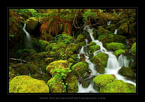 Moss-covered rocks and cascades in Olympic National Park, WA
