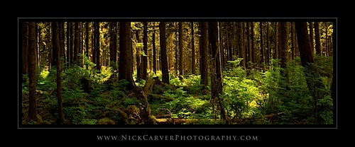 Olympic National Forest, WA